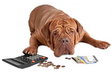 А вы заплатили налог за владение собаками?