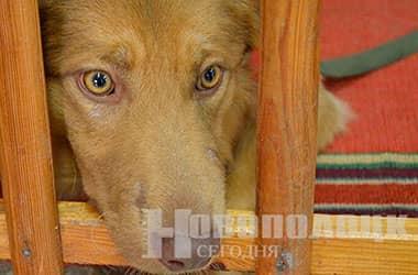 О мерах по упорядочению содержания домашних собак и кошек