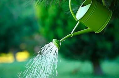 Сохраним зеленые насаждения вместе!